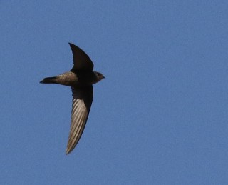 Plain Swift